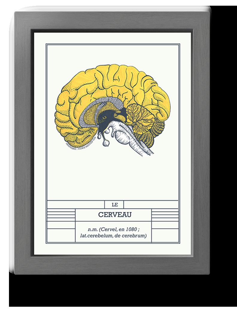 planche scientifique cerveau