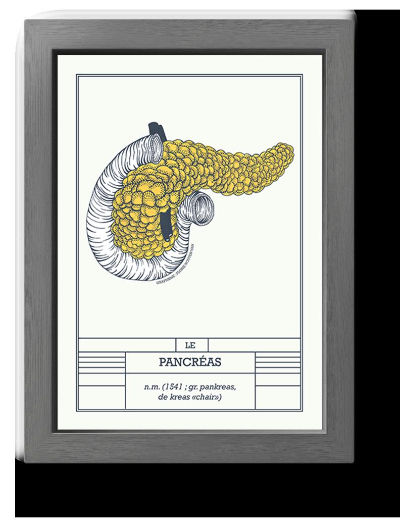 planche scientifique pancréas