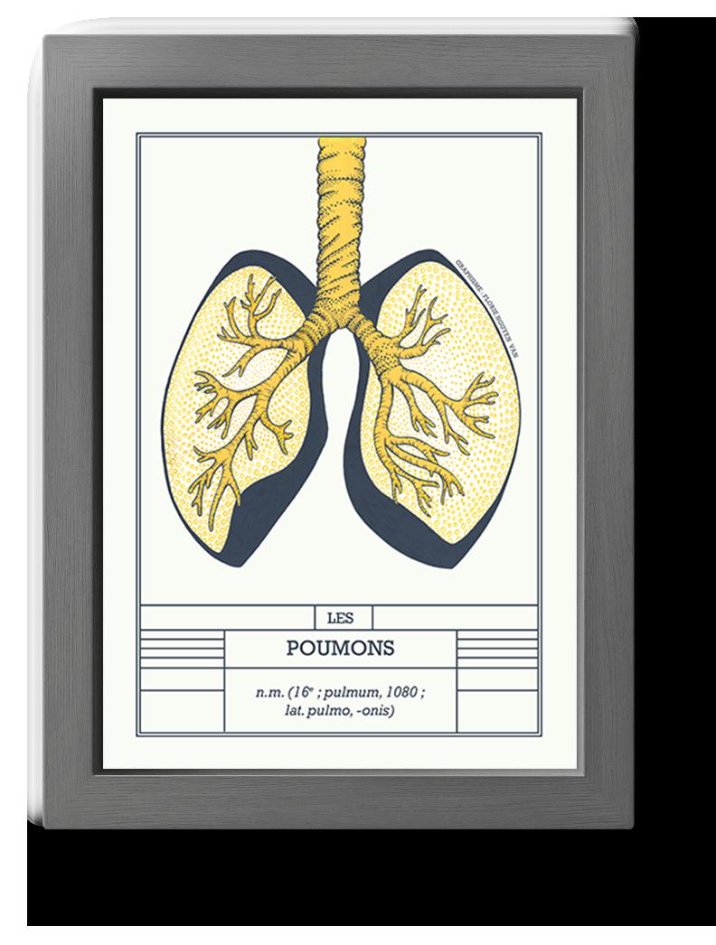 planche scientifique poumons